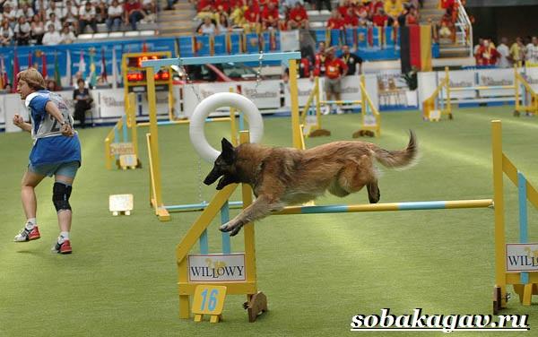 Что-такое-аджилити-Правила-снаряды-и-породы-собак-для-аджилити-12