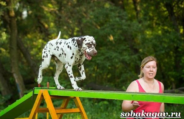 Что-такое-аджилити-Правила-снаряды-и-породы-собак-для-аджилити-14