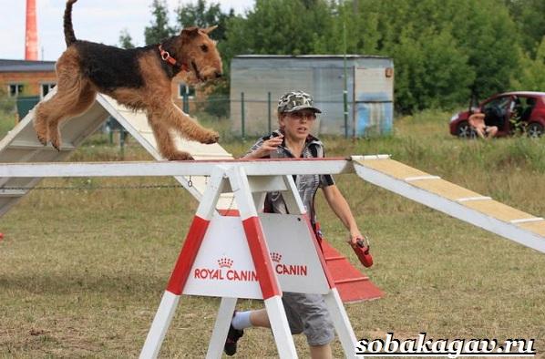 Что-такое-аджилити-Правила-снаряды-и-породы-собак-для-аджилити-6