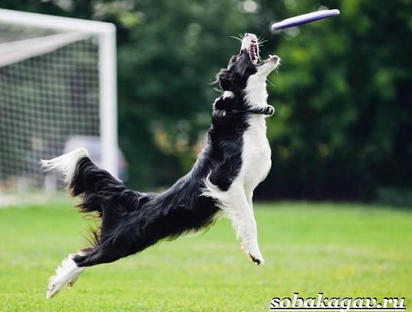 Фрисби-для-собак-Что-это-такое-виды-и-цена-тарелки-фрисби-1