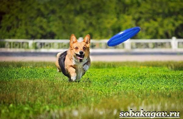 Фрисби-для-собак-Что-это-такое-виды-и-цена-тарелки-фрисби-2