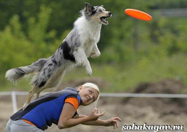 Фрисби-для-собак-Что-это-такое-виды-и-цена-тарелки-фрисби-3