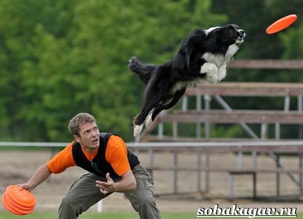 Фрисби-для-собак-Что-это-такое-виды-и-цена-тарелки-фрисби-4