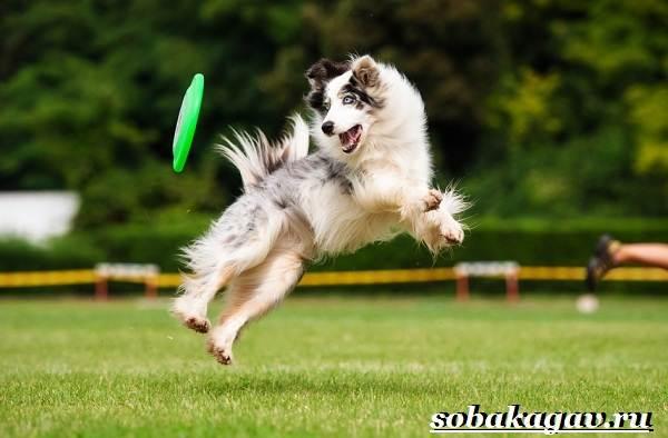 Фрисби-для-собак-Что-это-такое-виды-и-цена-тарелки-фрисби-5