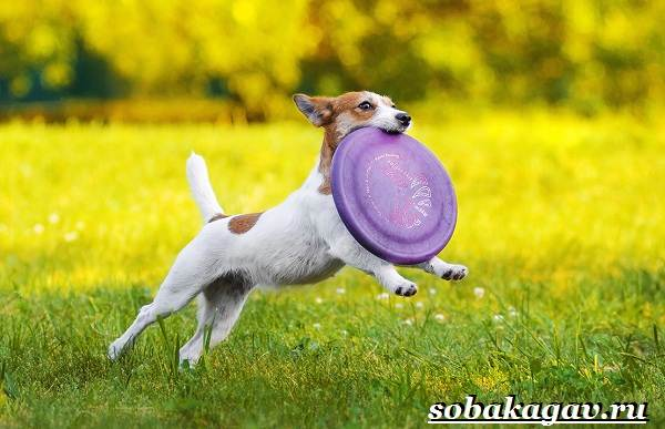 Фрисби-для-собак-Что-это-такое-виды-и-цена-тарелки-фрисби-6