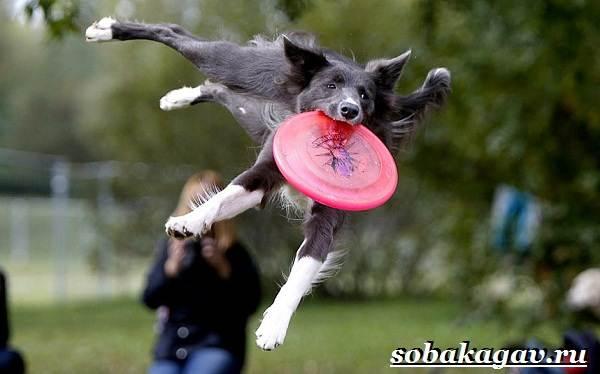 Фрисби-для-собак-Что-это-такое-виды-и-цена-тарелки-фрисби-7