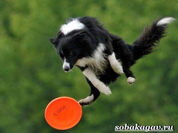 Фрисби-для-собак-Что-это-такое-виды-и-цена-тарелки-фрисби-8