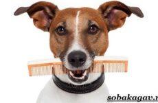 Груминг собак. Описание, особенности, виды и цена груминга