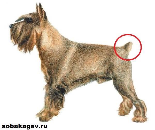 Купирование-хвоста-у-собак-1