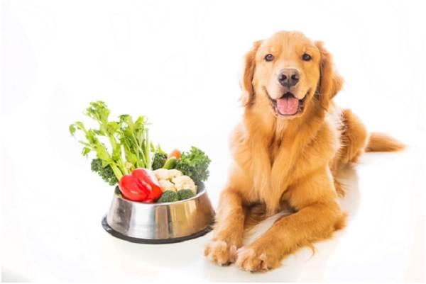 Чем-кормить-собак-возрастом-от-1-6-лет-мелких-средних-и-крупных-пород-4