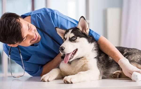 Кастрация-собак-Плюсы-минусы-и-в-каком-возрасте-можно-делать-5