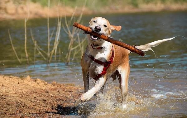 Кастрация-собак-Плюсы-минусы-и-в-каком-возрасте-можно-делать-6